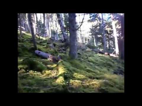 ZAN & MINA ΣΕ ΑΝΑΖΗΤΗΣΗ ΜΠΕΚΑΤΣΑΣ ΣΕ ΕΛΑΤΟ. Woodcock Hunting