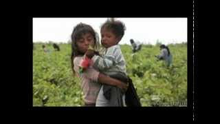 getlinkyoutube.com-Child Labour in Mexico's Agriculture Part 1 / 2
