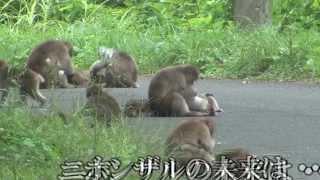 getlinkyoutube.com-予告:福島 生きものの記録シリーズ2~異変~  FUKUSHIMA:A RECORD OF LIVING THINGS Episode2 ~Disruption~:Trailer
