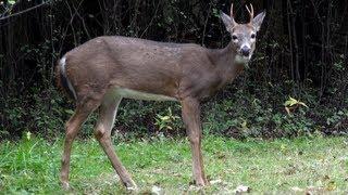 Deer: Deer Are Fine - Horrifying Planet - Ep. 8 view on youtube.com tube online.