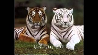 kole yacouba camara 35  الحاج - يعقوب كمارا width=