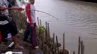 getlinkyoutube.com-Wow!! Mancing ikan dapat ular, seru!!