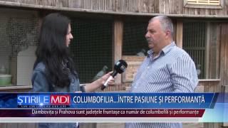getlinkyoutube.com-Columbofilia intre pasiune și performanta - MDI TV