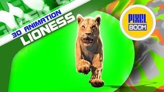 getlinkyoutube.com-Green Screen Animals Lioness Run Loop Various Angles - Footage PixelBoom