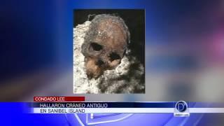 Hallaron cráneo antiguo en Sanibel Island