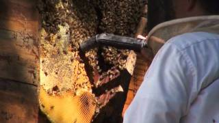 getlinkyoutube.com-Georgia Bee Removal