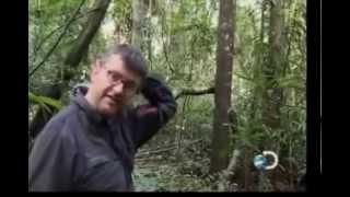 getlinkyoutube.com-sozinho na selva part 7