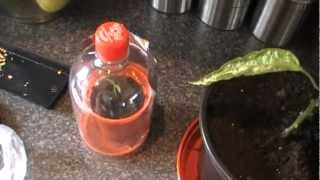 getlinkyoutube.com-Free chilli seeds and free propagator plus how to start the seeds off.