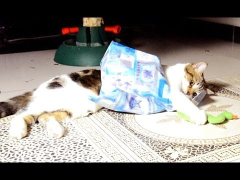 Funny Cats and Gifts