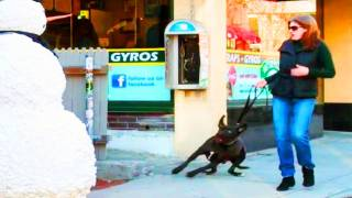 getlinkyoutube.com-Scary Snowman - Scaring Puppy Dogs Prank Compilation