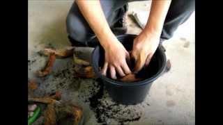 getlinkyoutube.com-การปลูกพืชกลับหัว RMUTL