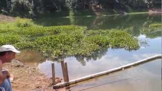 getlinkyoutube.com-pesca de piabamha e tilapia em santa isabel