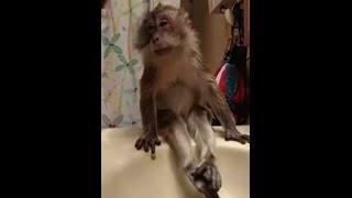 getlinkyoutube.com-Macaquinho adora banho, lindo.