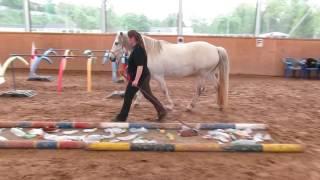 14.05.2017 - Horse Agility mit Viola