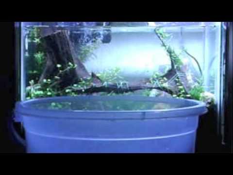 Mantenimiento diario de un acuario plantado