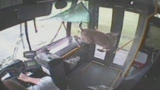 deer-crashes-through-bus-windshield
