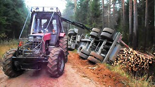 getlinkyoutube.com-Full trailer of wood turned over, Belarus Mtz 892.2 forestry tractor  helps to get up