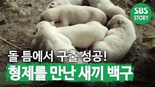 getlinkyoutube.com-[sbs TV 동물농장] 520회 2011년7월10일_03