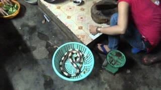 getlinkyoutube.com-Вьетнам, приготовление змеи. Ленточный крайт.