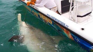 getlinkyoutube.com-Fishing Awesome 1,000 Pound Hammerhead Shark Giant Fish - Florida Shark Fishing - Chew On This