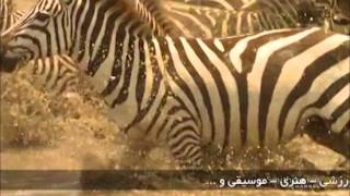 getlinkyoutube.com-سریعترین لحظات شکار حیوانات؛ باور نکردنی