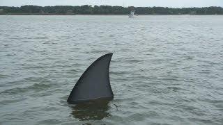 getlinkyoutube.com-Giant Shark