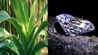 Menemukan Tanaman Ini Berarti Anda Temukan Tambang Berlian