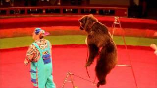 getlinkyoutube.com-Bear at Circus- Astana Kazakhstan- June 5th 2011