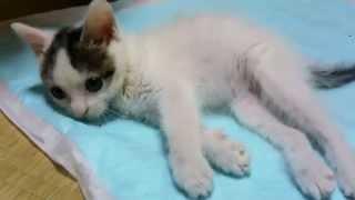 getlinkyoutube.com-ちびちゃん 障害をもった猫