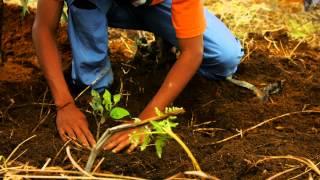 Madagascar : les pratiques agricoles évoluent pour protéger la ressource en eau