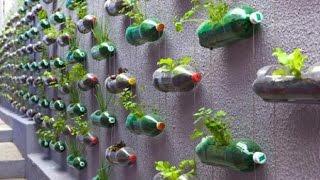 getlinkyoutube.com-Como fazer uma horta com garrafas pet 1ª parte