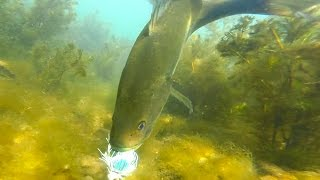 getlinkyoutube.com-SUPER CLEAR Underwater Sight Fishing! | Bed Fishing Tips for Bass