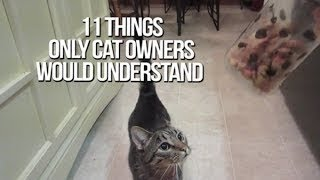 getlinkyoutube.com-11 Things Only Cat Owners Would Understand