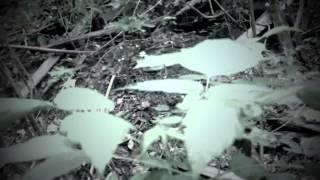 getlinkyoutube.com-Abandoned Adventures: Carden Bottoms