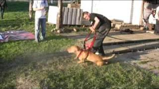 getlinkyoutube.com-Pit Bull Show Wasilków 2 3 maja 2009