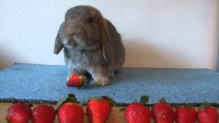 getlinkyoutube.com-Bunny Eating Strawberry