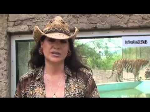 Nacen tigres blancos de bengala en Zoológico de Mexquitic