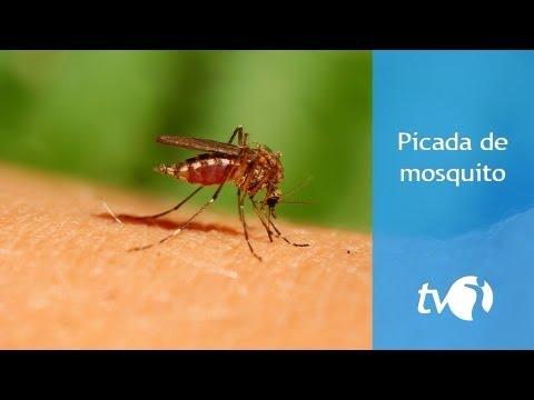 Picada de mosquito: evite e alivie a coceira na pele