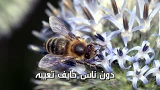 getlinkyoutube.com-ريض يا الطارش يا المعنى