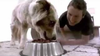 Short Film - Doggie Heaven - of James Wan and Leigh Whannell - 2008