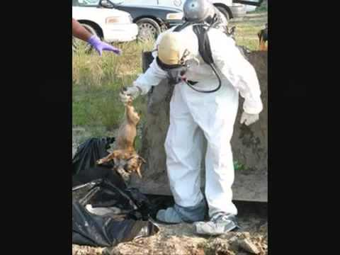 PETA KILLS ANIMALS!!!!!!!!!   YouTube3