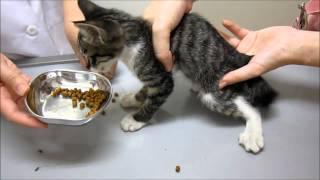 getlinkyoutube.com-子猫を保護!直後病院へ(ふうか)