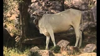 getlinkyoutube.com-The Glories of Govardhana Hill (Full DVD)