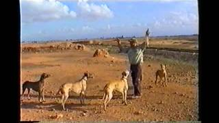 getlinkyoutube.com-صيد الارنب chasse lapin