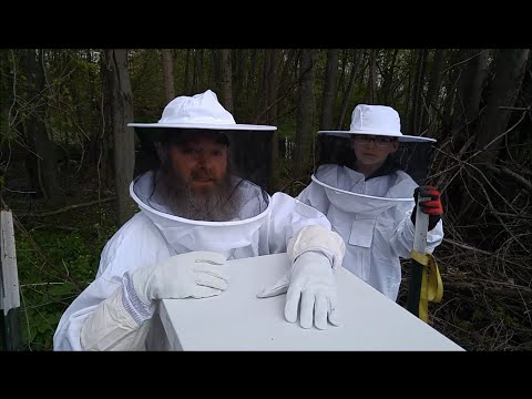 Checking On Our New Beehive And Finding The Queen