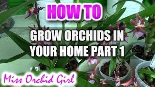getlinkyoutube.com-How to grow and rebloom different Orchids in a home environment Part 1