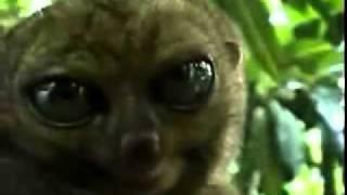 getlinkyoutube.com-animais dramaticos da web