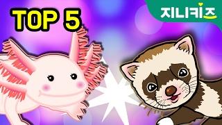 getlinkyoutube.com-TOP 5 얼짱 애완동물 키우기 작전♥ 우파루파 고슴도치 장수풍뎅이 앵무새 페릿 ★지니키즈
