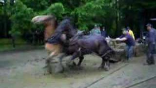 getlinkyoutube.com-Conquerall Mills Ox Pull--Heavy Draft horse class-2