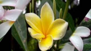 getlinkyoutube.com-Mang Koko   Samoja
